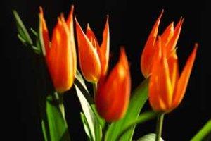 20070916131510-flores3.jpg