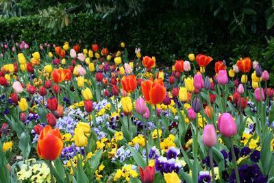 20080411154010-flores.jpg