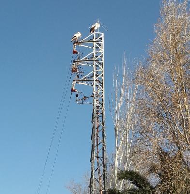 20160306093512-ciguenas-en-torre-de-alta-tension..jpg
